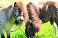 pony-2-800x531